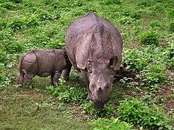 Chitwan National Park (2010)-70.jpg