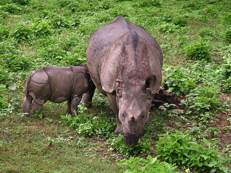 File:Chitwan National Park (2010)-70.jpg