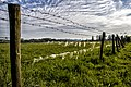 Cirrocumulus and Sheep's wool-Schapenwolken en Schapenwol (14073303913).jpg