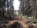 Clearing Trees for a Youth Football Field - panoramio.jpg