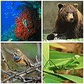 Collage fauna italiana.jpg