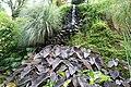 Colocasia esculenta 14zz.jpg