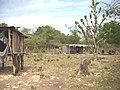 Comunidad Aborigen Porcelana - Baule - panoramio (2).jpg