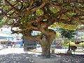 Conceptión de Atacó, Parque (12-2010) - panoramio.jpg