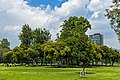 Copse of trees on Las Islas, Ciudad Universitaria, Mexico City.jpg
