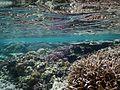 Coral reefs, Falealupo beach, Savai'i, Samoa (4) - August 2016.jpg