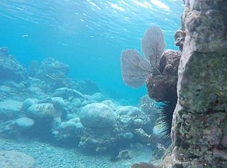 Coral reefs of the Virgin Islands