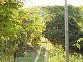 Cordillera Department, Paraguay - panoramio (25).jpg
