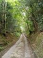 Country road near Bryn Saith Marchog - geograph.org.uk - 169220.jpg