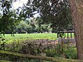 Cows grazing - geograph.org.uk - 493186.jpg