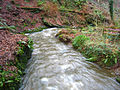 Crawfordsburn Glen (2) - geograph.org.uk - 664576.jpg