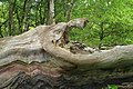 Creature in the Forest - geograph.org.uk - 1334913.jpg