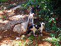 Crete cats waiting.jpg