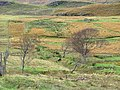 Croftland at Sconser - geograph.org.uk - 1561124.jpg