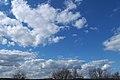 Cumulus mediocris-1.jpg
