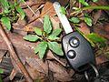 Cyanthillium cinereum leaf3 - Flickr - Macleay Grass Man.jpg