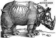 Dürer's Rhinoceros, woodcut, 1515.
