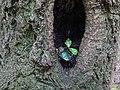 DSC02502 Wuchs Baum in Baum am Felsen am Ölknitzer Grund.jpg