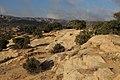 Dana Nature - panoramio (2).jpg