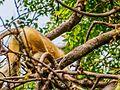 Daulatabad, Aurangabad - panoramio (36).jpg