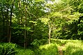 Deer-ahead-trail - West Virginia - ForestWander.jpg