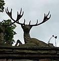 Deer - panoramio (7).jpg