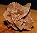 Desert rose (6412122887).jpg