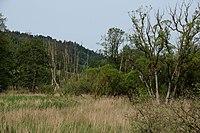 Deusmauer Moor bei Dietkirchen -003.JPG