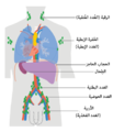 Diagram showing the lymph nodes lymphoma most commonly develops in CRUK 311-ar.png