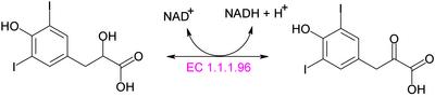 「hydroxypyruvate reductase」 「ヒドロキシピルビン酸レダクターゼ」 「酵素」 「還元酵素」 「ピル」 「ヒドロキシ」 「ビン」