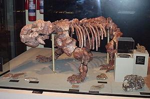 Dinodontosaurus - Mounted Dinodontosaurus skeleton