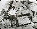 Diplodocus, Dinosaur NM 1923.jpg