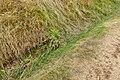 Ditch along Belas Knap Long Barrow.jpg