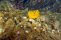 Diving Ko Tao, Thailand 1643.jpg