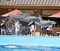 Dolphins 2 (15377291797).jpg
