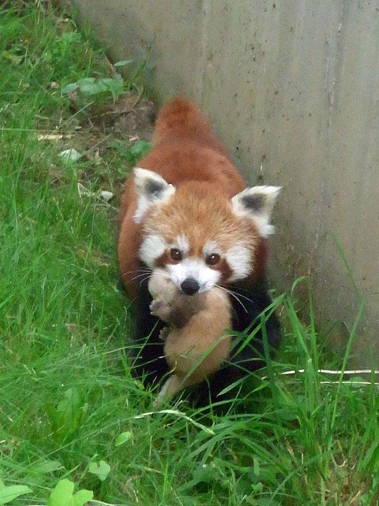 File dortmund zoo kleiner wikimedia commons for Kleiner couchtisch weiay