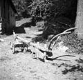 """Drevešček """"osipavənk"""" za krompir osipati, Dob 1950 (2).jpg"""