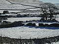 Dry stone walls near Middle House Farm - geograph.org.uk - 131993.jpg