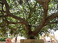 Dwaraka and around - during Dwaraka DWARASPDB 2015 (249).jpg