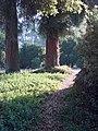 Early Morning, Propect Park, Redlands, CA 7-12 (7644746808).jpg