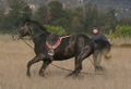 East bulgarian horse training.PNG