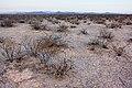 East of the Black Range - Flickr - aspidoscelis (11).jpg