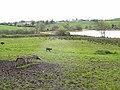 Eastern side of Enaghan Lough - geograph.org.uk - 1302773.jpg