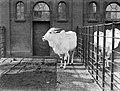 Een zeboe in Artis, Bestanddeelnr 189-0128.jpg