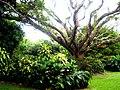El Club Bosque, Silvania, Colombia - panoramio.jpg