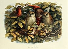 Elf and Owls - Richard Doyle, illustration from In Fairyland, 1870.jpg