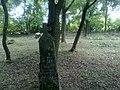 Elhagyott temető - Abandoned Cemetery - panoramio (2).jpg