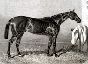 Ellington (horse) - Ellington. Contemporary etching by an unknown artist.