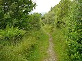 Enclosed path south east of Blaen-nos which runs over the shoulder of Frenni Fawr - geograph.org.uk - 1637403.jpg