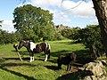 Equine scene near Swallerton Gate - geograph.org.uk - 865312.jpg